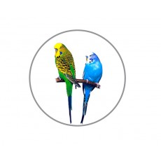 Budgerigar Acrylic Button