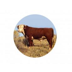 Bull Acrylic Button