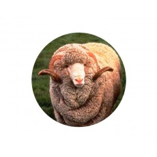 Farmyard Animals - Sheep Acrylic Button
